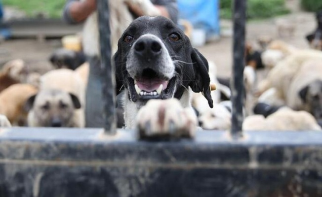 Barolardan TBMM'ye hayvan hakları yasası çağrısı