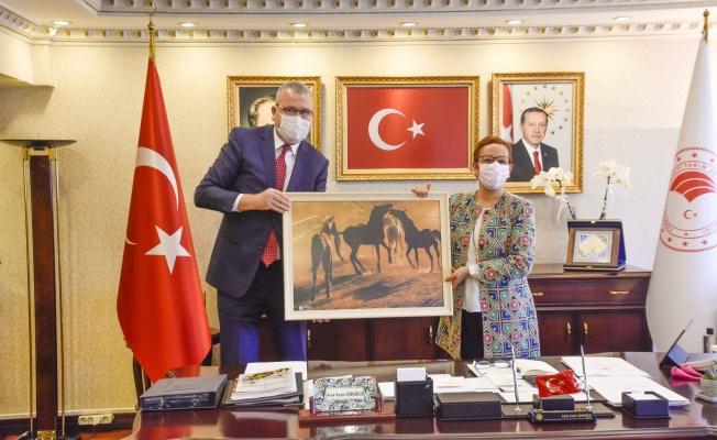 Karacabey'deki aromatik ve tıbbi bitki yetiştiriciliğine Ankara'dan özel ilgi