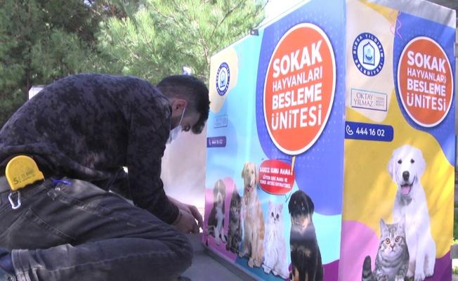 Sokak Hayvanları Yıldırım'ın Gönüllülerine Emanet