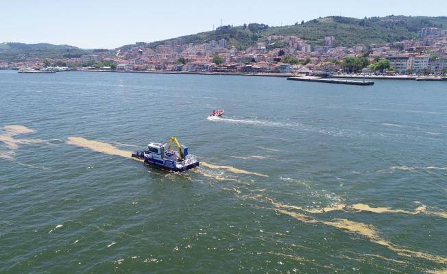 Mudanya'da Deniz Salyası Temizleme Çalışmaları Başladı
