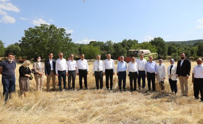 Bursa'da siyez buğdayı ve çörek otunda hasat zamanı
