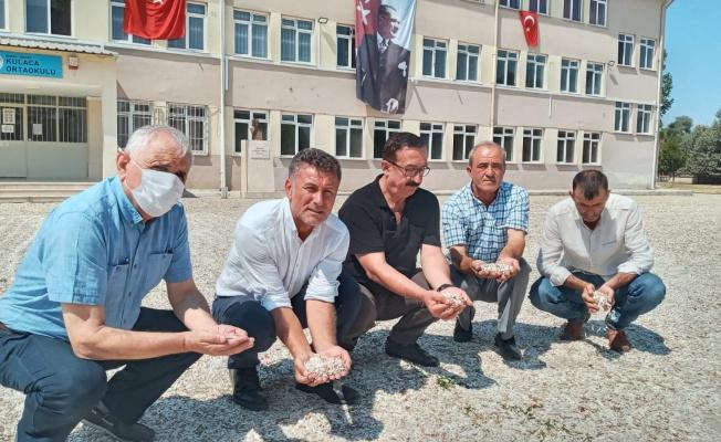 Sarıbal: Çerezlik ayçiçeği üreticisi perişan