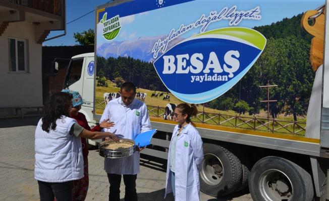 Bursa'da Siyez Buğdayı'nda hasat bereketi