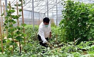 Yerli ve Milli Tohumlar Osmangazi'de Yetişiyor