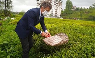 Sarıbal'dan Yeni Çay Kanunu